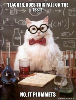 Teacher cat