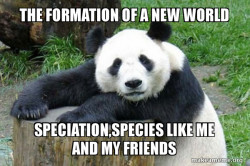 Confession Panda
