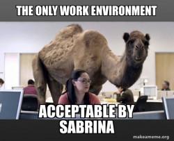 Hump Day Camela