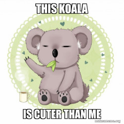 This Koala Be Cuter Than Me