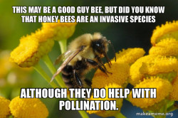 Good Guy Bee compound complex sentence