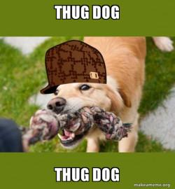 Scumbag dog