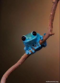Timesheet Frog