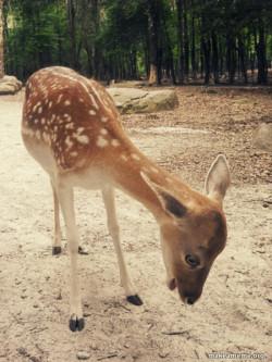 ugggg Deer
