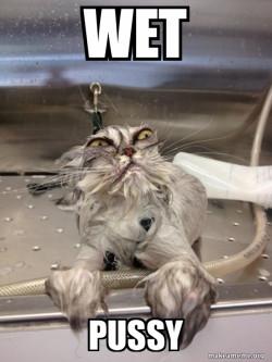Cat Bath Returns