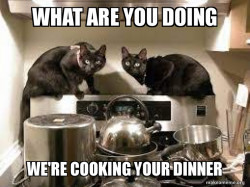 Cat's Cooking