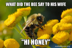 Bee jokes with a idiot