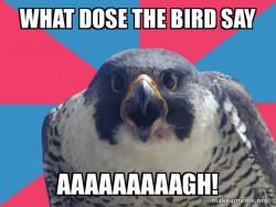 de bird said