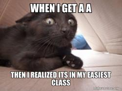 Schitzo Cat
