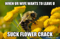 flower crack bee
