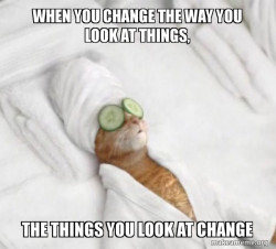 Pampered Cat Meme