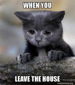 Sad pet
