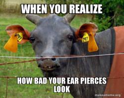 Hairless Cow