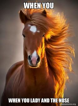 Ridiculously photogenic horsew