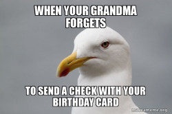 Stuff That Didn't Happen Seagull