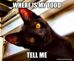 were is my food cat