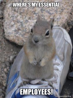 Standover Squirrel