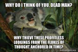 Depressed Koala