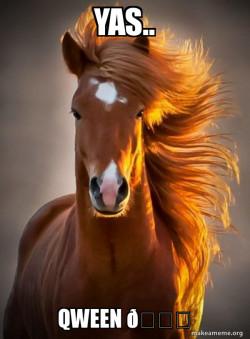 Ridiculously photogenic horse