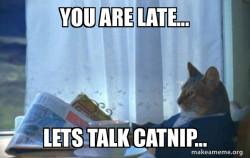 Negotionating  Cat