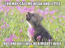 Motavitive Wolf