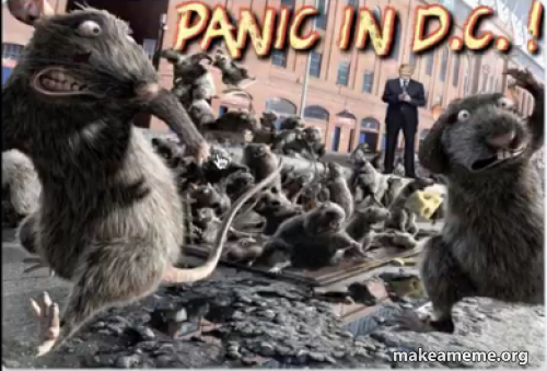Panic In DC | Make a Meme