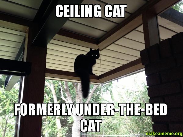 Ceiling Cat Video