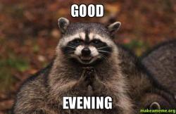 Good evening make a meme evil plotting raccoon meme altavistaventures Images