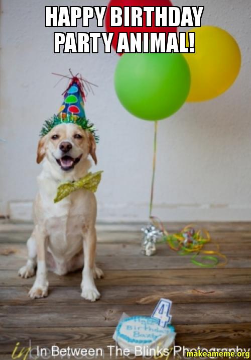 Happy Birthday party ap43s9 happy birthday party animal! make a meme