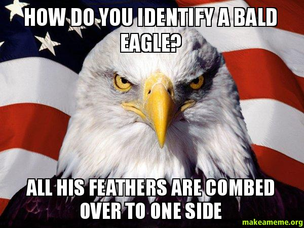 How Do You Identify A Bald Eagle? All His Feathers Are. Oil Signs. Cerebellar Ataxia Signs Of Stroke. Iron Signs. Apollo Signs Of Stroke. Seizures Signs. Adrenal Tumour Signs. Girly Signs Of Stroke. Somatic Symptoms Signs