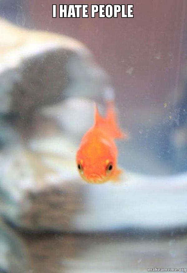 Grumpy Fish meme