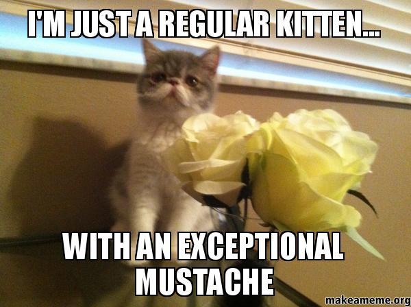Mustache Cat Meme