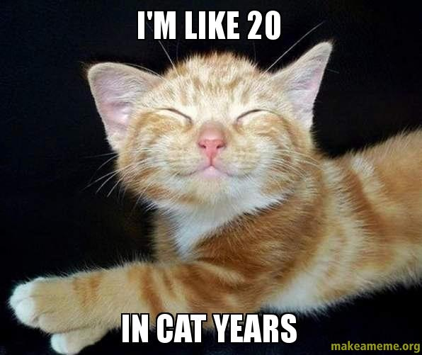 What Are Cat Years Like