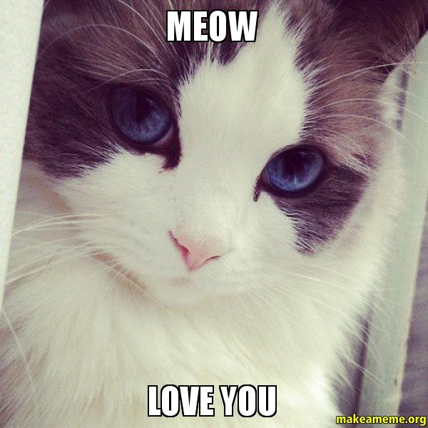 MEOW LOVE YOU pin by adrenaline rush on memes etc pinterest memes