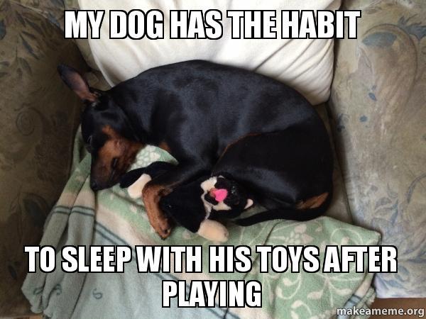Dog Sleeping On A Dog Bed