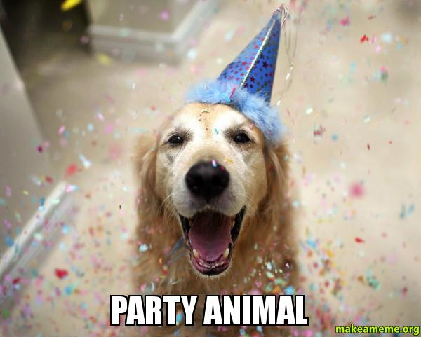 PARTY ANIMAL party animal make a meme