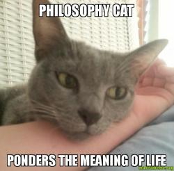 Philosophy for Cats