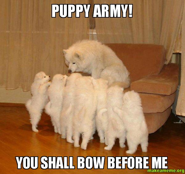 Image result for puppy army