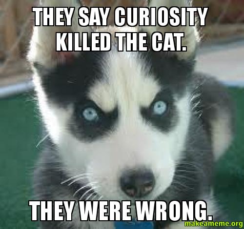 Curiosity Killed The Cat Video