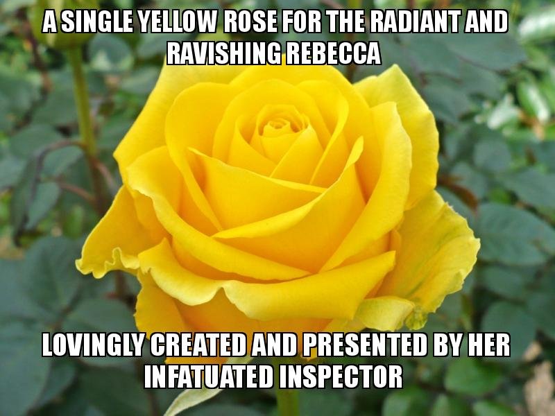 A single yellow rose for the radiant and ravishing Rebecca Lovingly