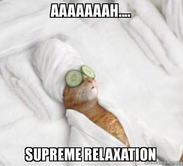 Pampered Cat Meme meme