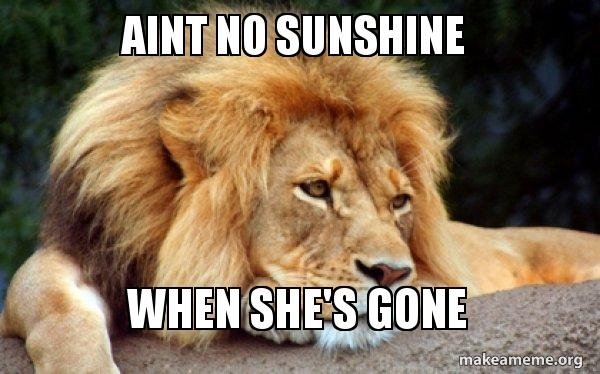 Aint No Sunshine When Shes Gone Confession Lion Make A Meme
