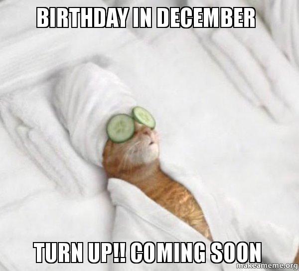 Pampered Cat Meme meme