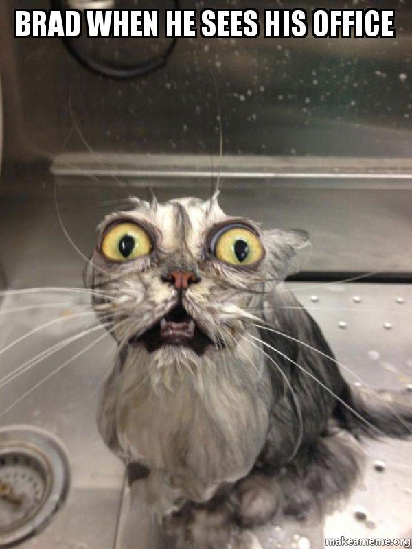 Brad When He Sees His Office Cat Bath Make A Meme