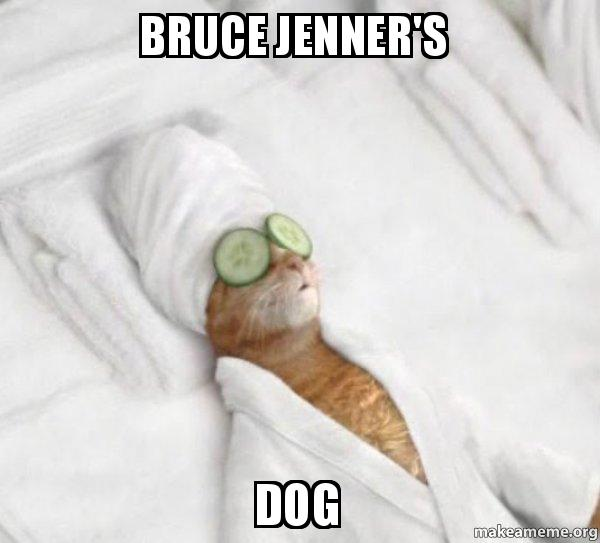 Bruce Jenners Dog Pampered Cat Meme Make A Meme