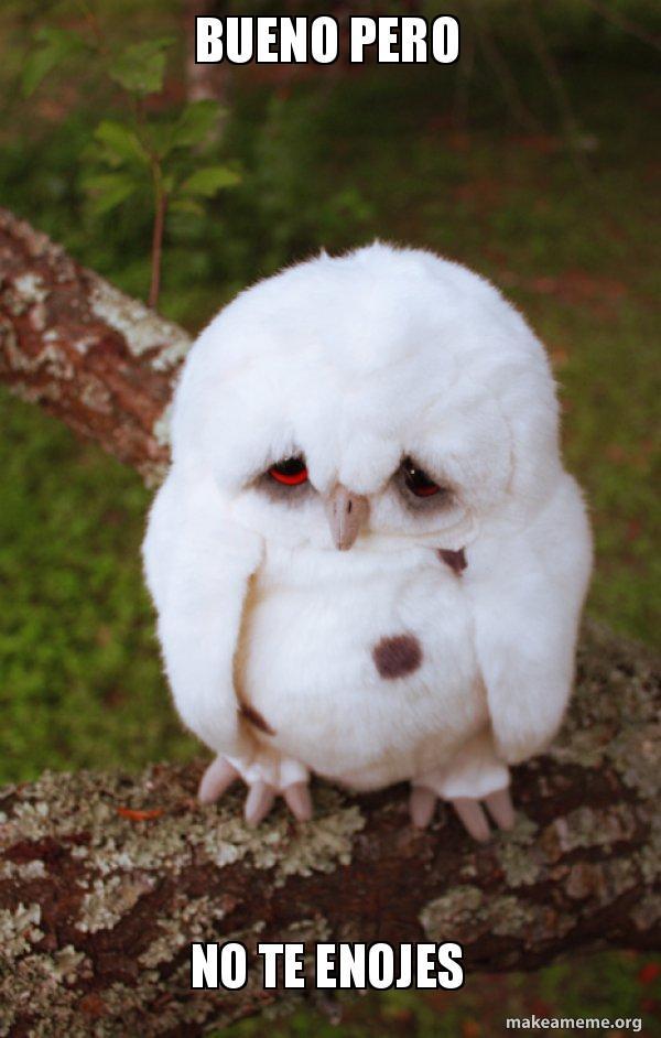 Bueno Pero No Te Enojes Sad Owl Make A Meme