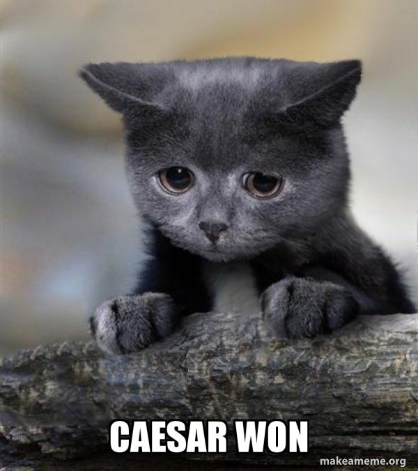 Confession Cat meme