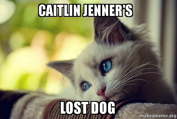 Caitlin Jenners Lost Dog First World Cat Problems Make A Meme