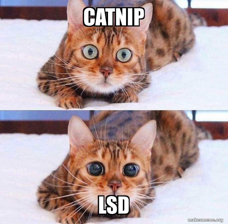 Catnip Lsd Catnip Vs Lsd Make A Meme
