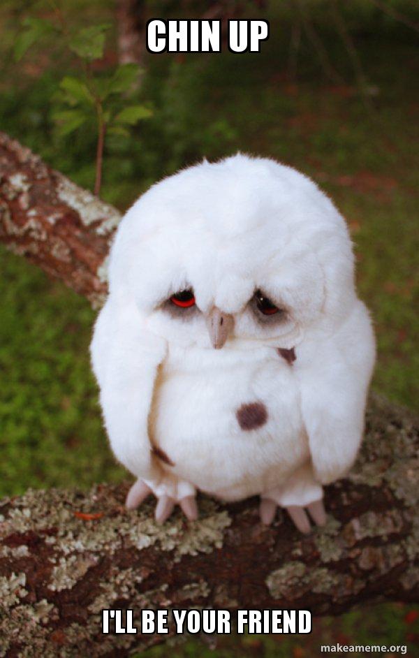 Chin Up I'll Be Your Friend - Sad Owl | Make a Meme